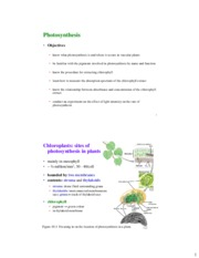 Photosynthesis - Copy