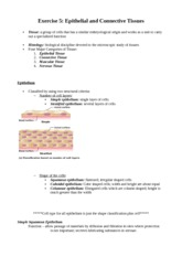 Exercise 5 - Epithelial and Connective Tissues (5)