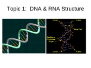 Topic 1, DNA & RNA structure.ppt.edu