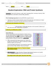 Josh Harmon RNAProteinSynthesis.pdf - Name_Josh Harmon ...