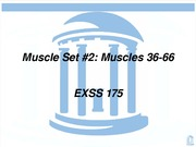 Muscles36-66_1
