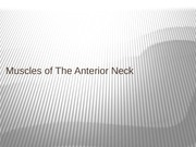 11. Muscles of The Anterior Neck