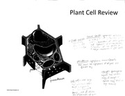 Plant Cell Review