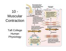 10 Muscular Contraction.pdf