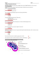Cellular Respiration Worksheet (PDF) - CELLULAR RESPIRATION Write ...
