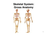 15 bone gross anatomy