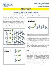 Copy of Gizmo_ RNA Protein Synthesis - Amalia A..pdf ...