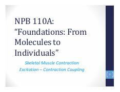 NPB110A Lecture 26 Excitation – Contraction Coupling final