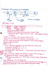 Intro to Physiology Class Notes  7