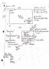 Strategic Management Class Notes 2