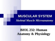 1-Skeletal Muscle-Intro & Microanatomy