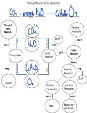 Copy_of_A-Photosynthesis__Cellular_Respiration_Chart.pptx-2