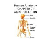 BIO 171 Chapter 7 Axial Skeleton -Notes (1).pptx
