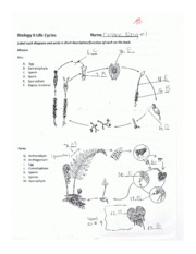 Life cycles worksheet