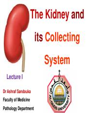 23- The renal system - Lecture I