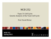 MCB 252 Topic 31 Cell Cycle- Genetic Analysis of the Yeast Cell Cycle Sp2015