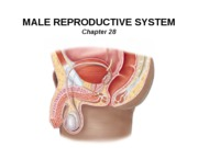 24_Male Reproduction