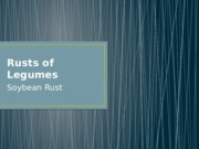 Rusts of Legumes