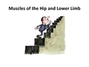 2 Muscles of the hip and lower leg