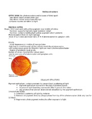 Retina structure CH 14 notes