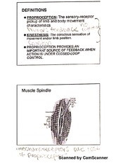 Proprioception and vision notes
