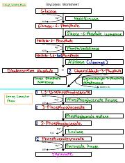 Glycolysis Worksheet.pdf - Glycolysis Worksheet Glucose ATP ...