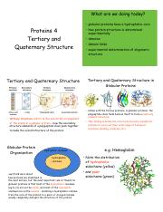 9 - Proteins 4 - Tertiary and Quaternary Structure -Jan 26 - VB.pdf