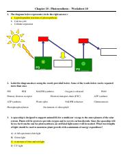 Chapter 10_Worksheet 10_Photosynthesis