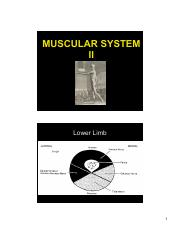 ANP 300 - Lecture 9 - Muscular System II (color)