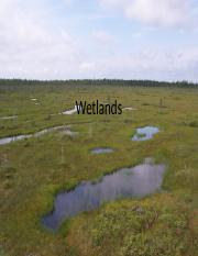 Lecture15 - Wetlands.pptx