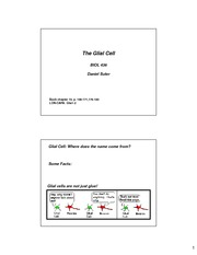 The Glial Cell BIOL 436 lecture notes