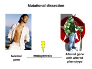 12 Mutational Dissection