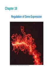Chapter_18-Regulation_of_Gene_Expression-Biol108-SP2012L