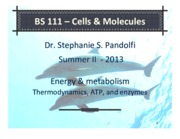 Energy and Metabolism.pdf