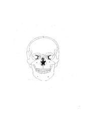 Skull drawing frontal view