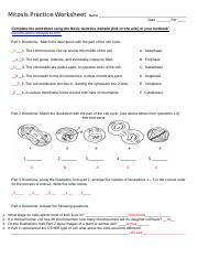 Mitosis Worksheet Ansawer Docx Mitosis Practice Worksheet Name Date Per Complete The Worksheet Using The Basic Genetics Website Link On The Wiki Or Course Hero