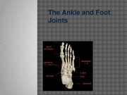 Ankle and Foot Lecture Slides