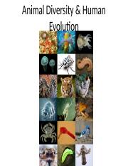 Animal Diversity and Human Evolution(1)