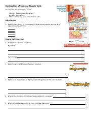 anim_contraction_skeletal_muscle_cells_worksheet (1).doc