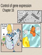 191 Ch 16 - Control of Gene expression.ppt