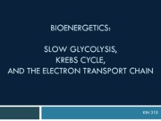 Monday_9th_September_-_Slow_Glycolysis_K 2