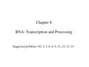 Chapter 8 RNA