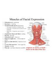 Facial Expression Muscles.jpg