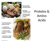 NUTR3362_Lecture8_proteins_part1_posted