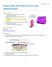 gram stain (with student notes)