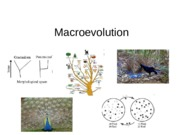 ANTH 101 Macroevolution Lecture Notes