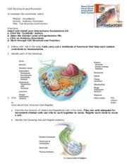 Chapter 3 Cell structure.doc