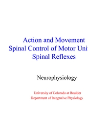 9 - Control of motor Units and Spinal Reflexes Lecture slides