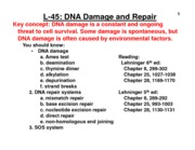 Cain_Lecture+45_DNA+Repair_Handout