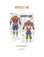 H. Phys - Muscle Lab Report.pdf